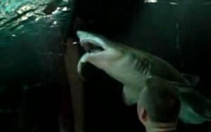 sharkeatsshark